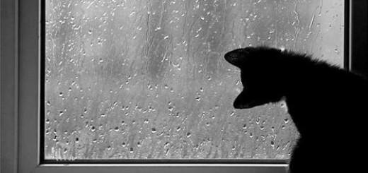 запотівання вікон
